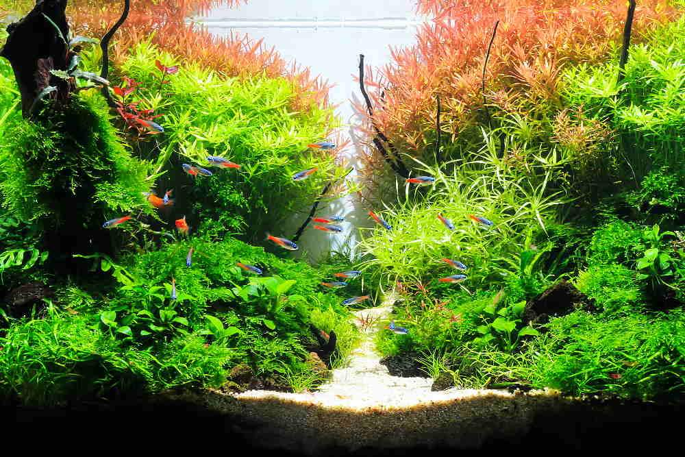 Which Planted Tank Fertilizer Is Right for You?