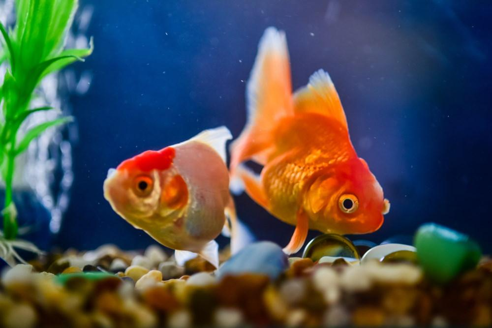Freshwater Fish Tank Cycling How To Prepare For New Fish Aquarium Co Op