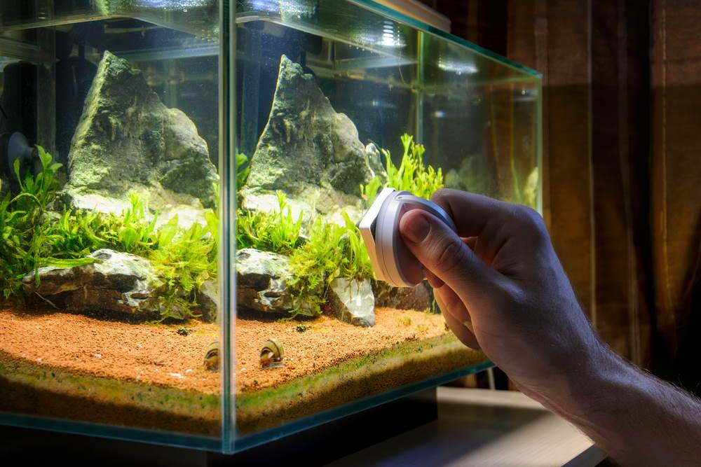How To Properly Clean Your Aquarium Tips For Easy Tank Maintenance Aquarium Co Op