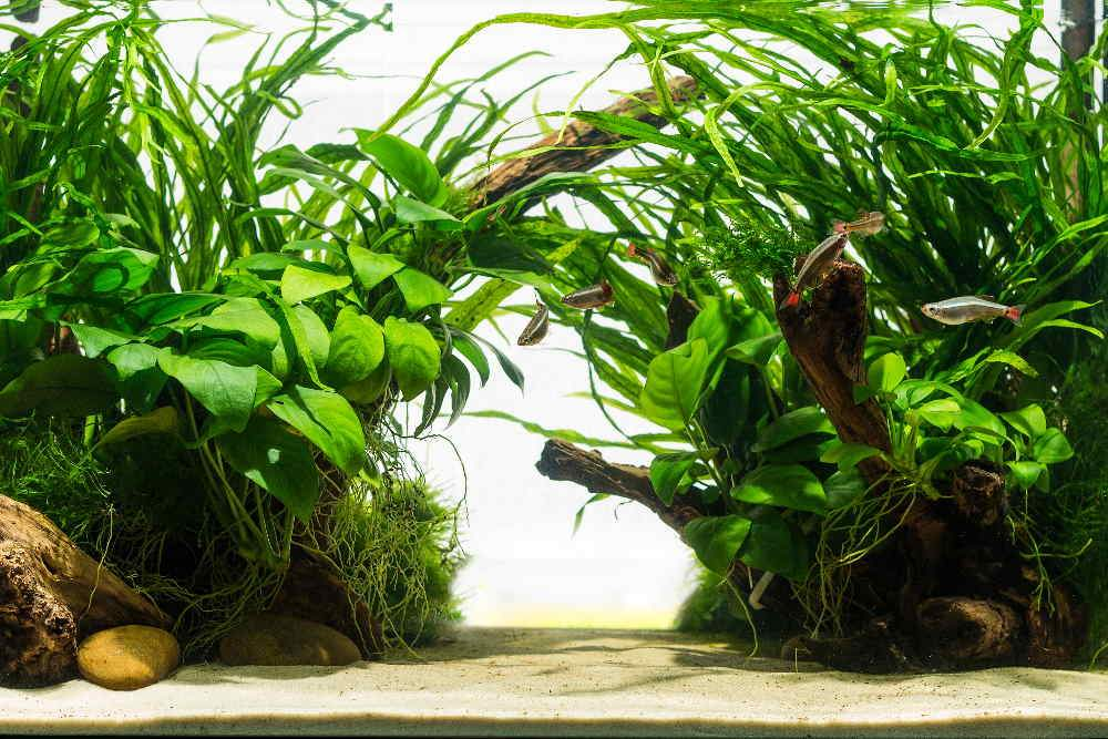 Top 10 Easy Aquarium Plants for Beginners