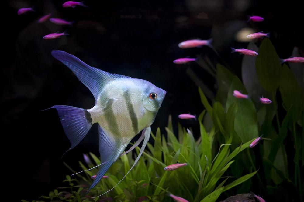 10 Best Aquarium Fish for Beginners