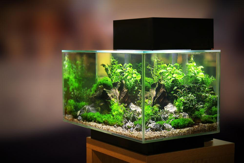 How to Pick the Best Planted Aquarium Light