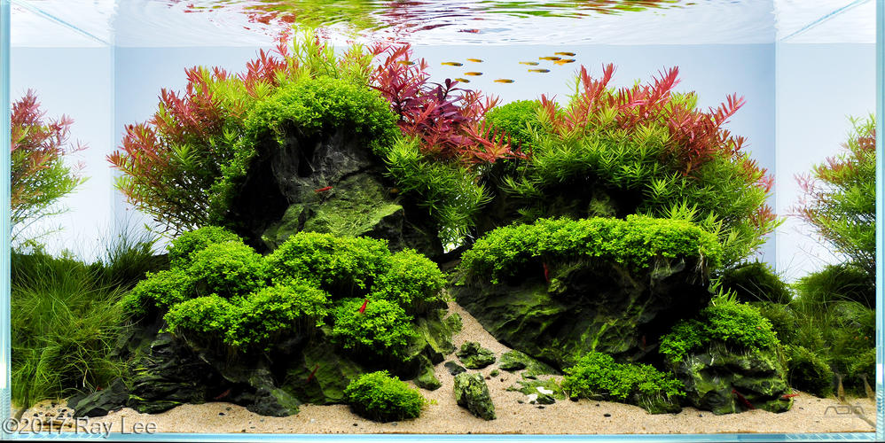 Which Planted Tank Fertilizer Is Right For You Aquarium