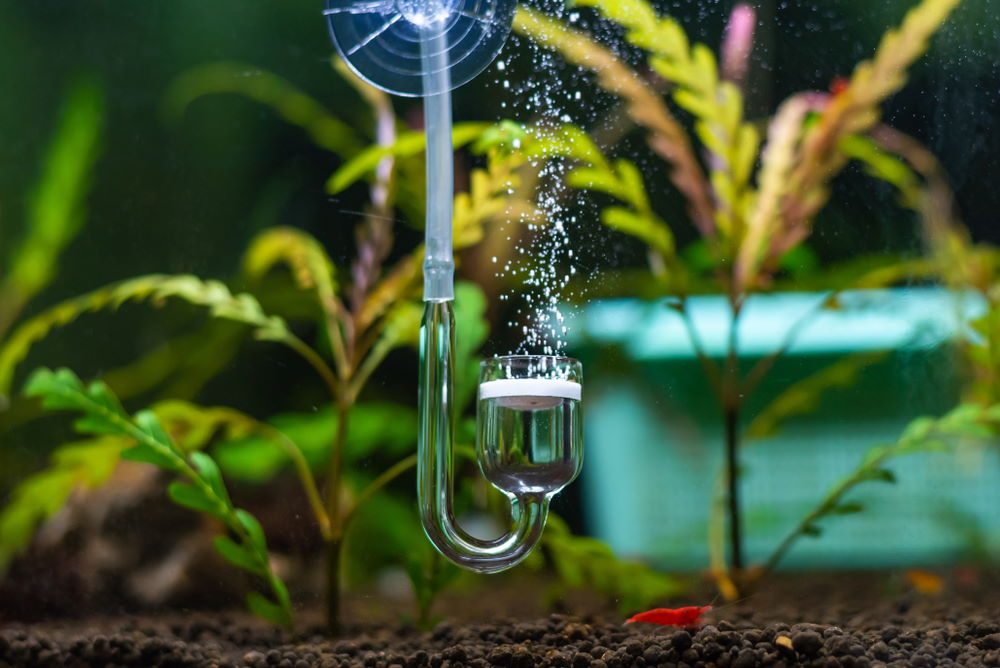 pressurized CO2 injection in planted aquarium