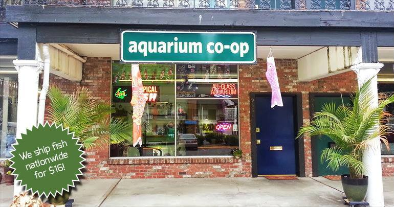 Aquarium Co-Op store photo