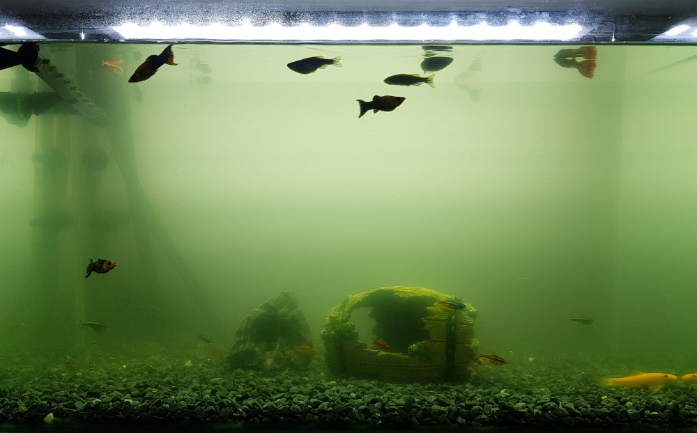 green water aquarium