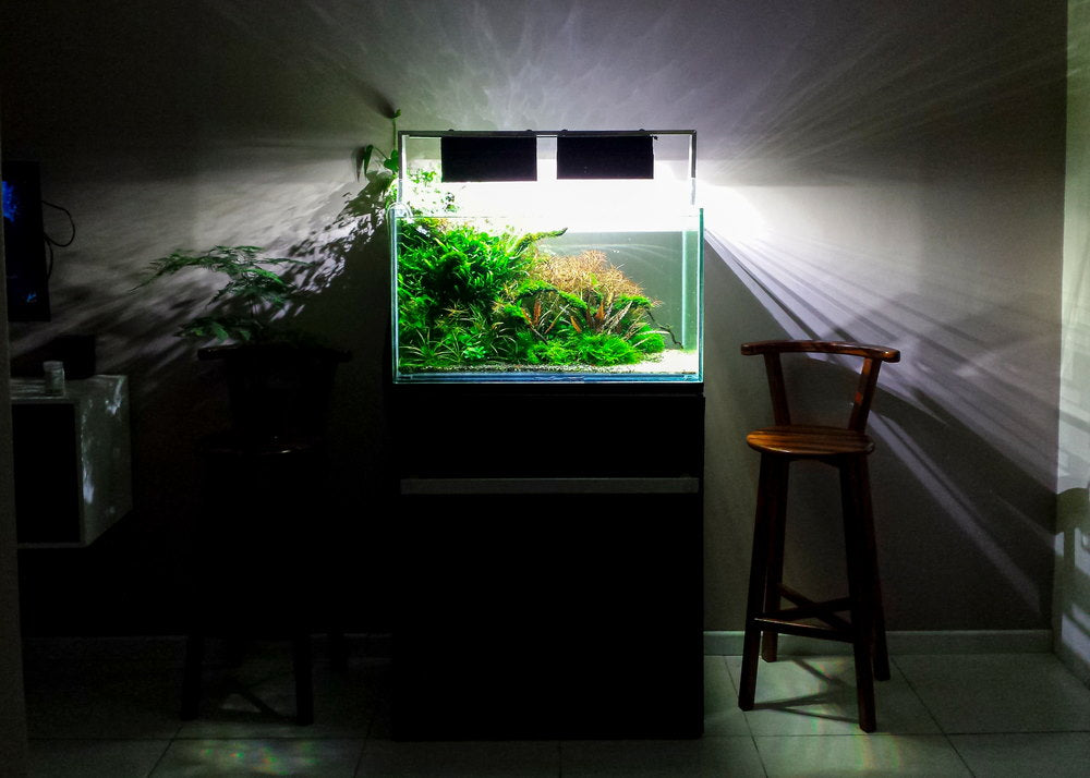 planted aquarium on a stand