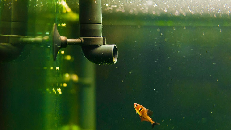 how to cycling your aquarium filter