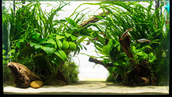 How To Pick The Best Substrate For A Freshwater Planted Aquarium Aquarium Co Op