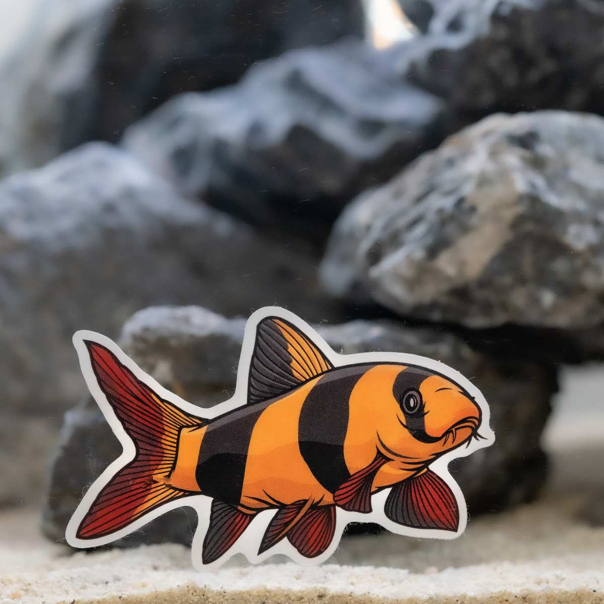 Clown Loach Decal Sticker