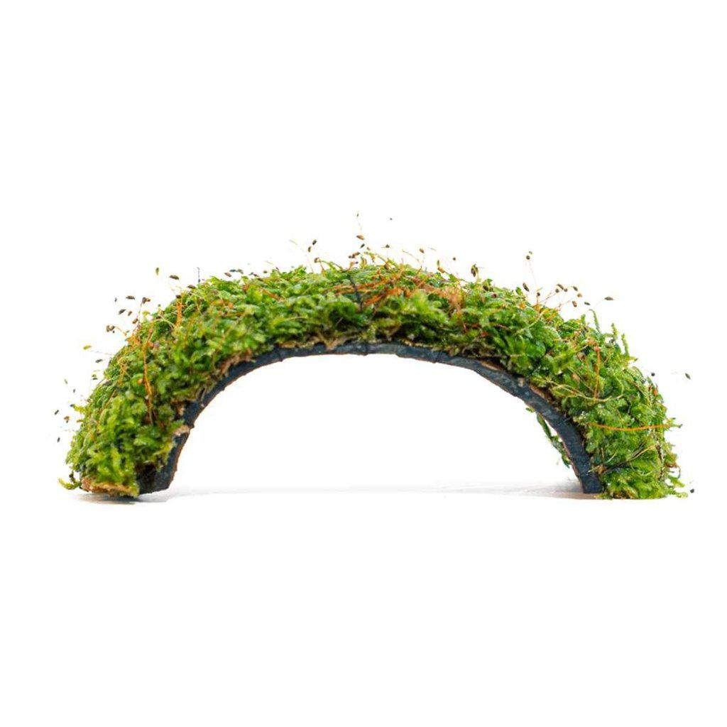 Christmas Moss Bridge-Aquarium Co-Op