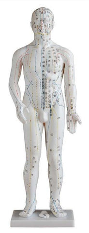 "28"" Male Acupuncture Mannequin - AM-OM-1"