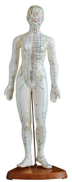 "19"" Female Acupuncture Mannequin - AM-OM-5"