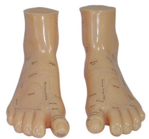 Acupuncture Feet Model - AM-OM-6