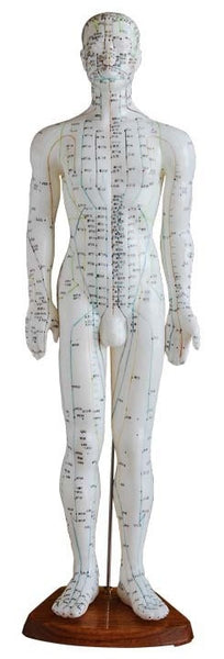 "25"" Male Acupuncture Mannequin - AM-OM-3"