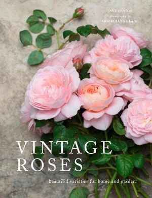 Vintage Roses: Beautiful Varieties For Home