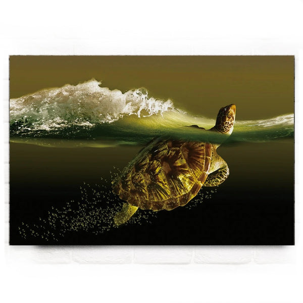 Tableau Tortue - Slow-Time