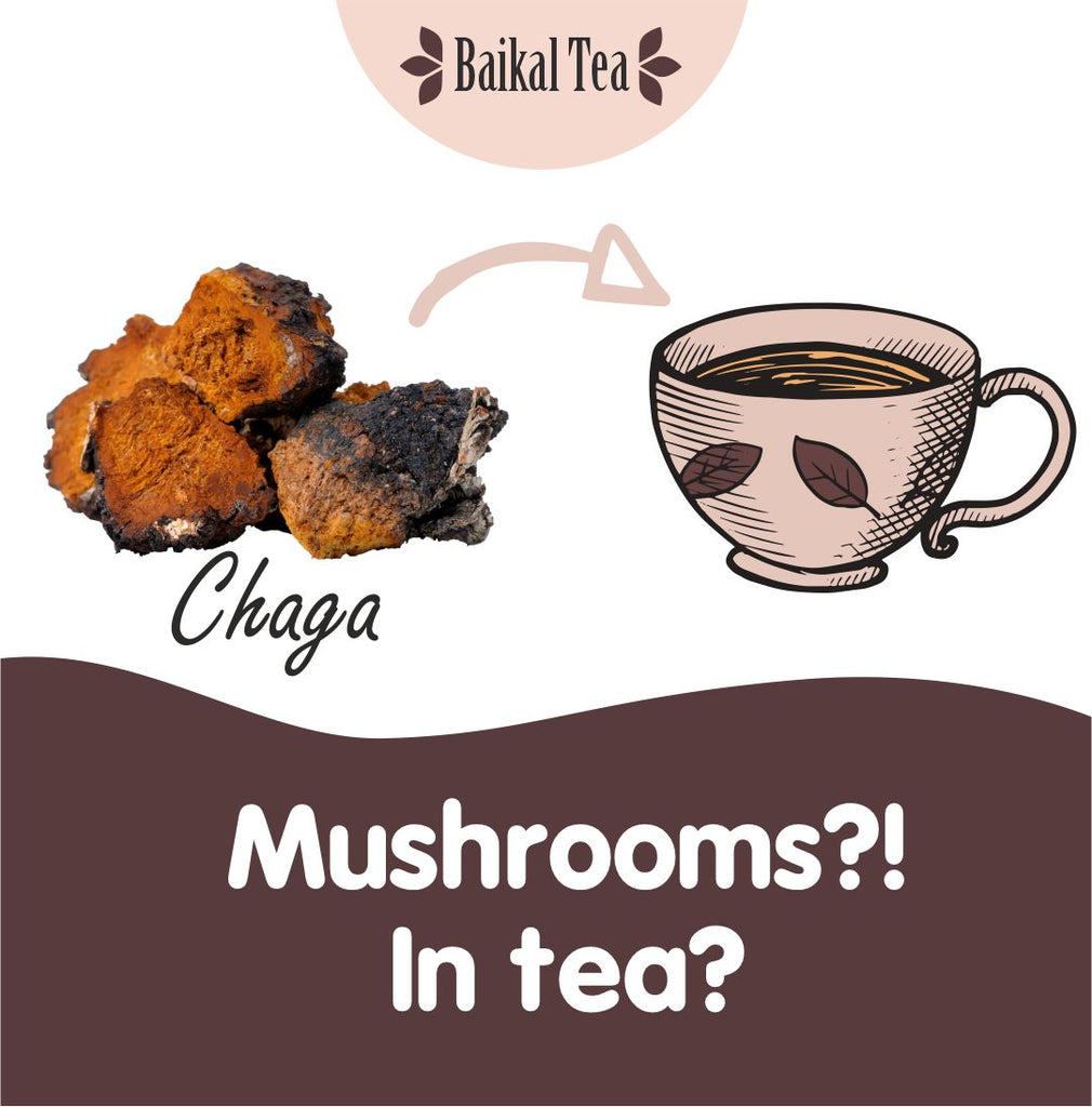 mushrooms in tea chaga tea baikal tea