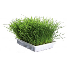 Flamingo Soft Cat Grass