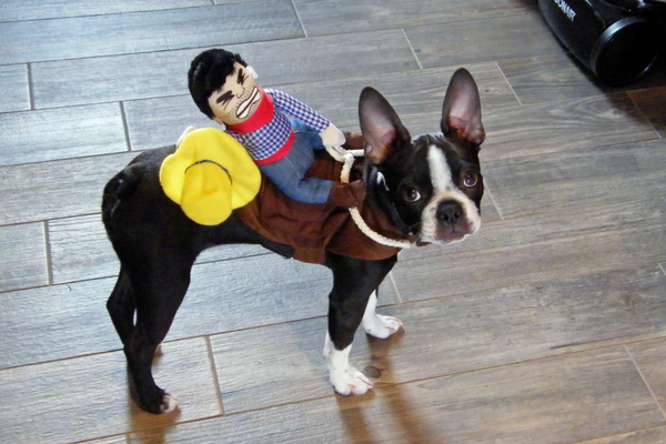 Cowboy Rider Dog Costume - Boston Terrier