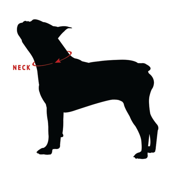 How to Measure your Dog's Neck