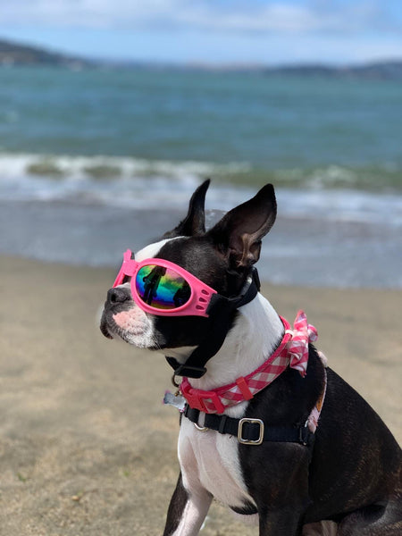 Mia on vacation in San Francisco on the Beach