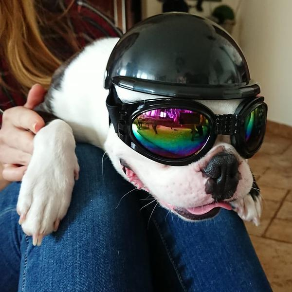 Protective Helmets For Dogs