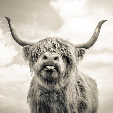 Black & White Highland Cow Canvas - OrderConcept