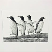 Load image into Gallery viewer, Gentoo Parade 10x8 Mounted Print