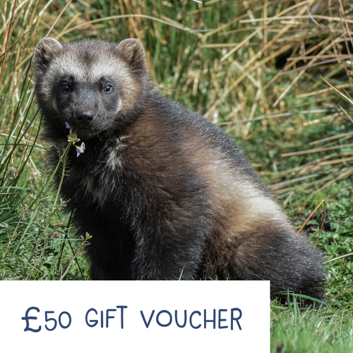 Highland Wildlife Park Gift Voucher - £50