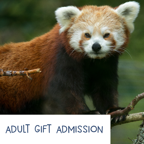 Adult - HWP Gift Admission E-Voucher
