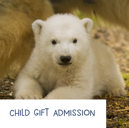 Child - HWP Gift Admission E-Voucher