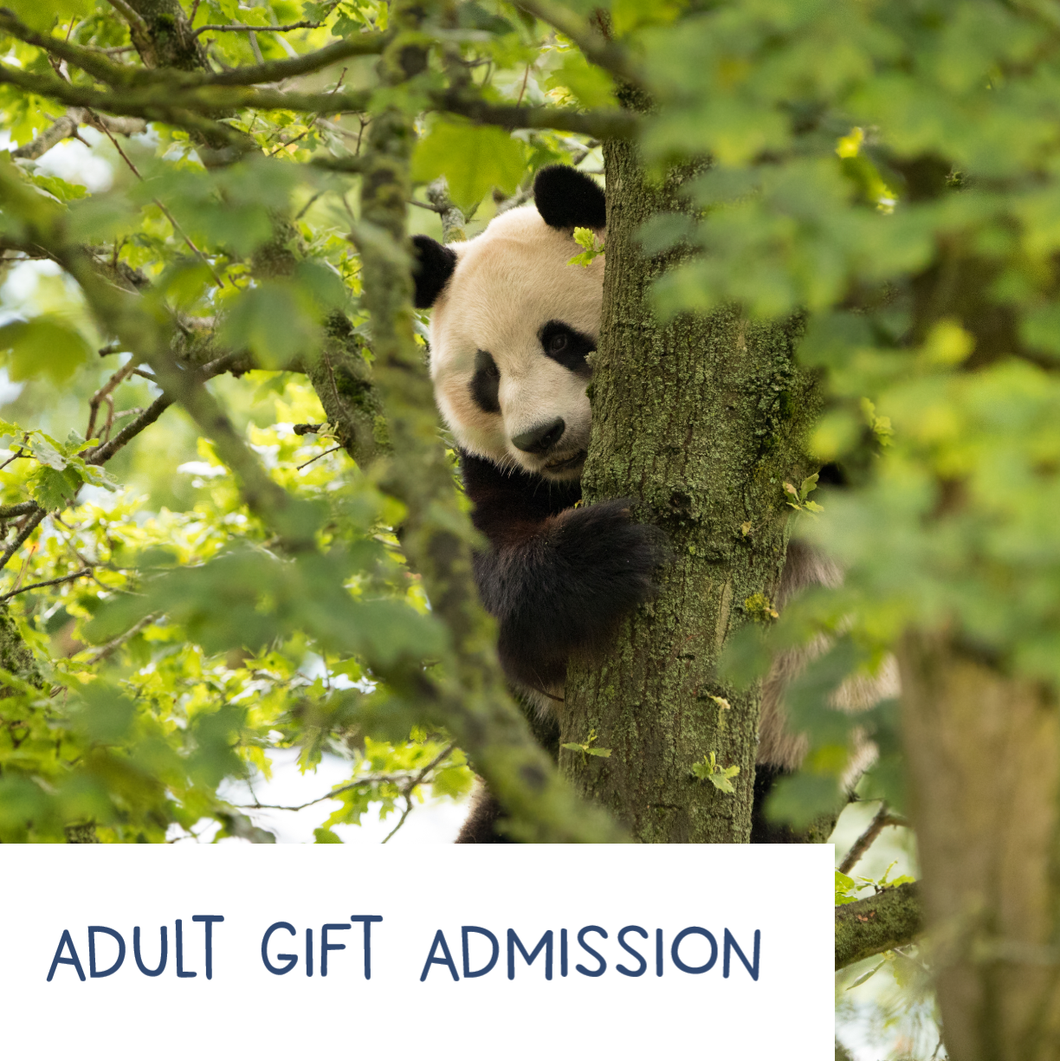 Adult - EZ Gift Admission E-Voucher