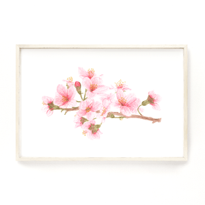 Cherry Blossom Print, Watercolor Cherry Blossom Painting, Cherry Tree Art, Floral art, Pink flowers - Emilie Taylor Art