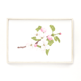 Apple Blossom Print, Watercolor Apple Blossom Painting, Apple Tree, Floral Art Print, Floral Decor - Emilie Taylor Art
