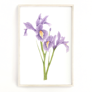 Iris Print, Watercolor Irises Painting, Iris Art, Floral Art, Floral Print, Purple Irises