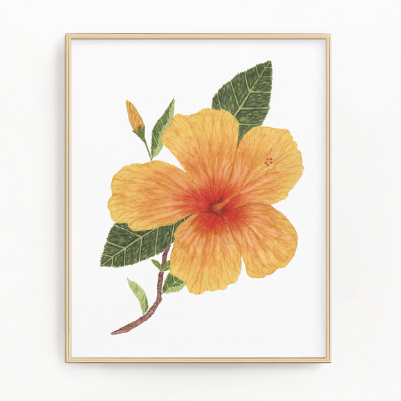 Watercolor Hibiscus, Hibiscus Painting, Hibiscus Art, Floral Art, Floral Print, Tropical Floral
