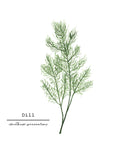 Dill Watercolor Painting, Kitchen Wall Art, Herb Painting, Botanical Art, Gardener Present - Emilie Taylor Art