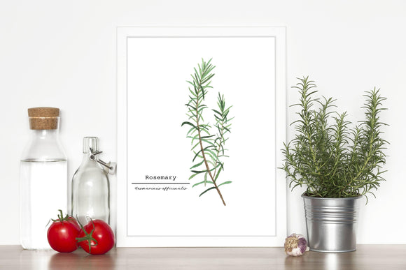 Rosemary Watercolor Painting, Kitchen Wall Art, Mother's Day Present , Herb Painting, Botanical Art - Emilie Taylor Art