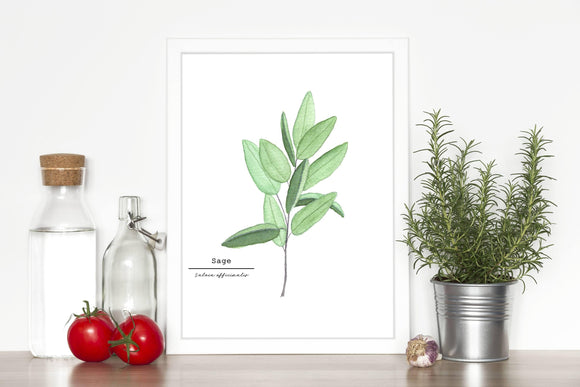 Sage Watercolor Painting, Kitchen Wall Art, Herb Painting, Botanical Art, Gardener Present - Emilie Taylor Art