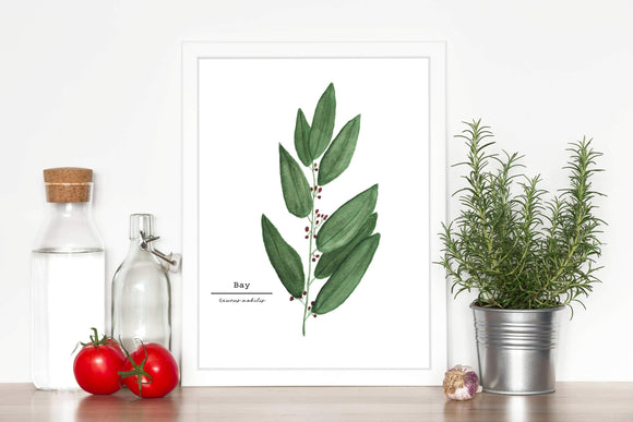 Bay Watercolor Painting, Botanical Art,  Wall Art, Herb Painting, Bay Leaves, Botanical Watercolor - Emilie Taylor Art