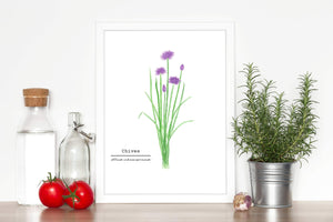 Chives Watercolor Painting, Kitchen Wall Art, Herb Painting, Botanical Art print, Gardener Gift - Emilie Taylor Art