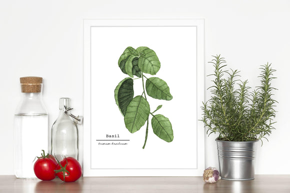 Basil Watercolor Painting, Kitchen Art, Mother's Day Gift, Herb Painting, Botanical Art - Emilie Taylor Art