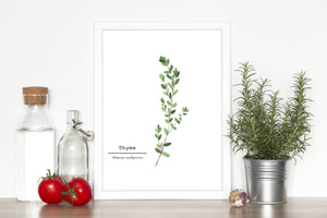Thyme Watercolor Painting, Kitchen Wall Art, Herb Painting, Food Art, Botanical Art, Gardener Gift - Emilie Taylor Art