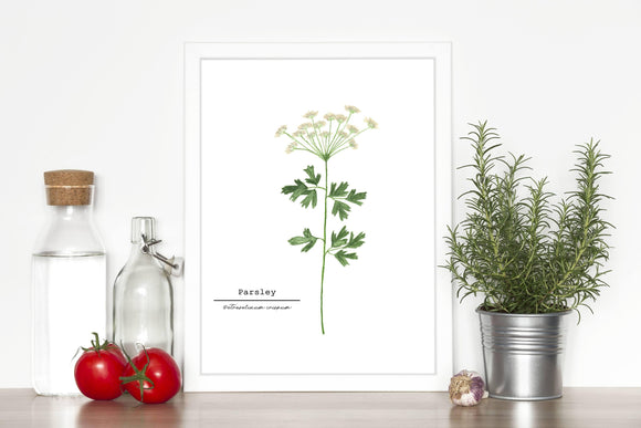 Parsley Watercolor Painting, Kitchen Art,  Herb Painting, Botanical Art, Gardener Present - Emilie Taylor Art