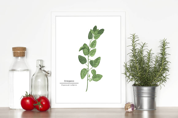 Oregano Watercolor Painting, Kitchen Wall Art, Herb Painting, Botanical Art Print, Gardener Gift - Emilie Taylor Art