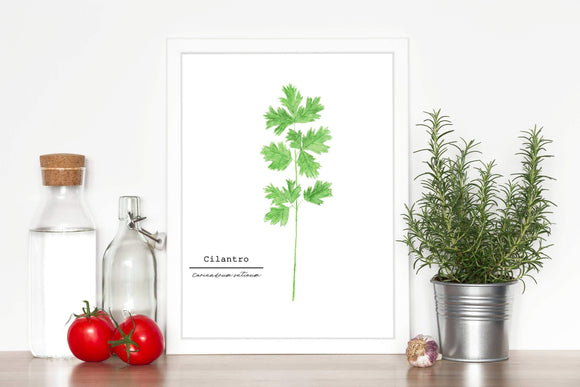 Cilantro Watercolor Painting, Kitchen Art, Herb Painting, Food Art, Botanical Art, Gardener Gift - Emilie Taylor Art