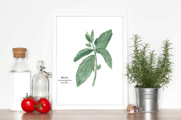 Mint Watercolor Painting, Kitchen Wall Art, Fine Art Print,  Home Decor, Herb Painting, Botanical Art - Emilie Taylor Art
