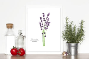 Lavender Watercolor Painting, Kitchen Wall Art, Herb Painting, Botanical Art, Gardener Present - Emilie Taylor Art