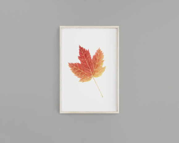 Watercolor Maple leaf Painting, Leaf Art, Fall Decor, Leaf Print,  Fall Gift, Maple Leaf - Emilie Taylor Art